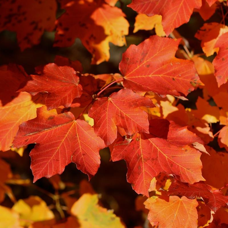 Couleurs d'automne... Img_2429