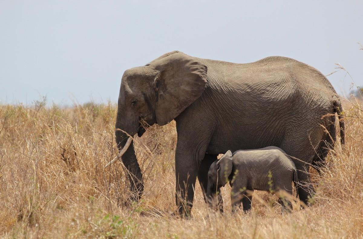 Vols de brousse en Tanzanie .     - Page 2 Img_4611