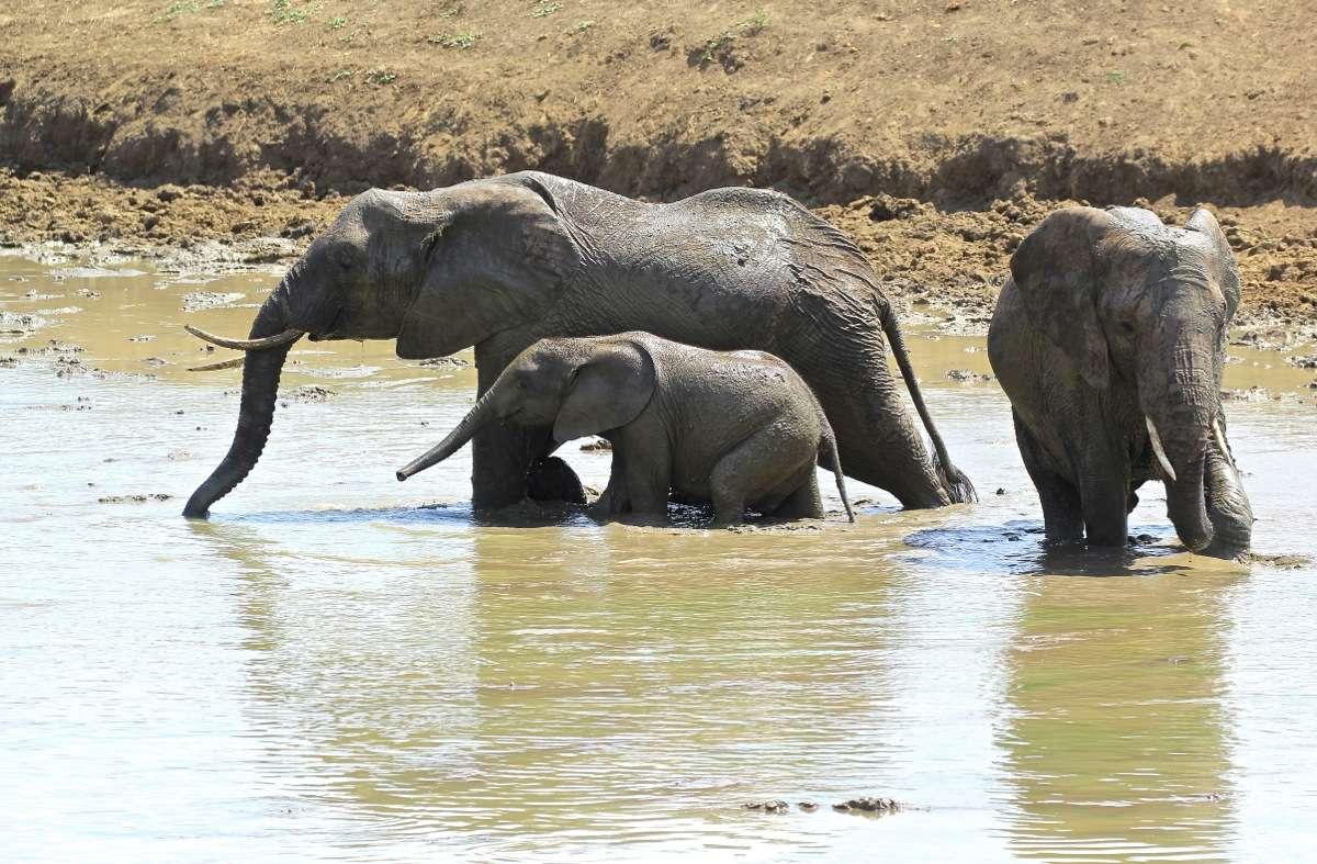 Vols de brousse en Tanzanie .     - Page 2 Img_4710