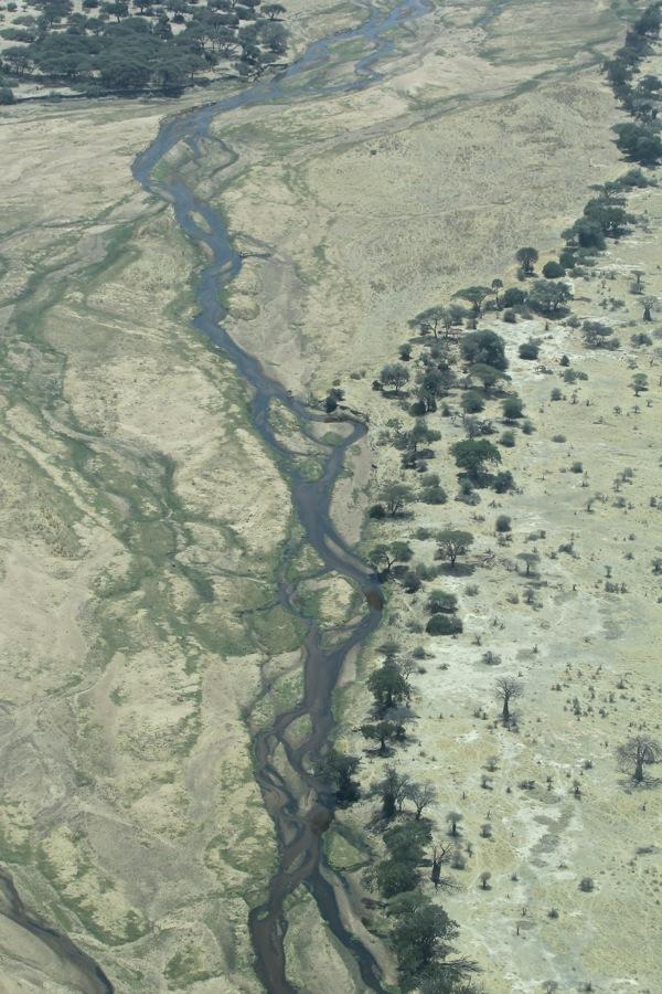 Vols de brousse en Tanzanie .     - Page 3 Img_4813