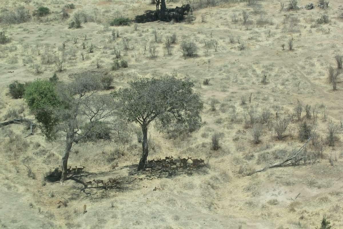 Vols de brousse en Tanzanie .     - Page 3 Img_4814