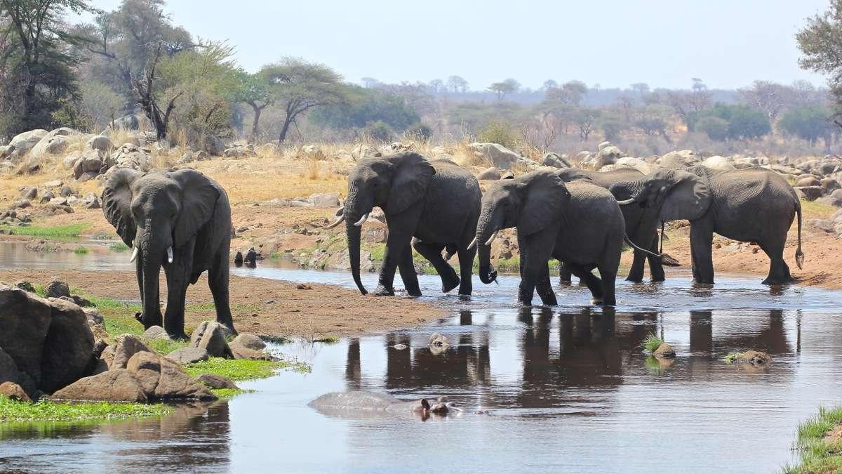 Vols de brousse en Tanzanie .     - Page 3 Img_5011