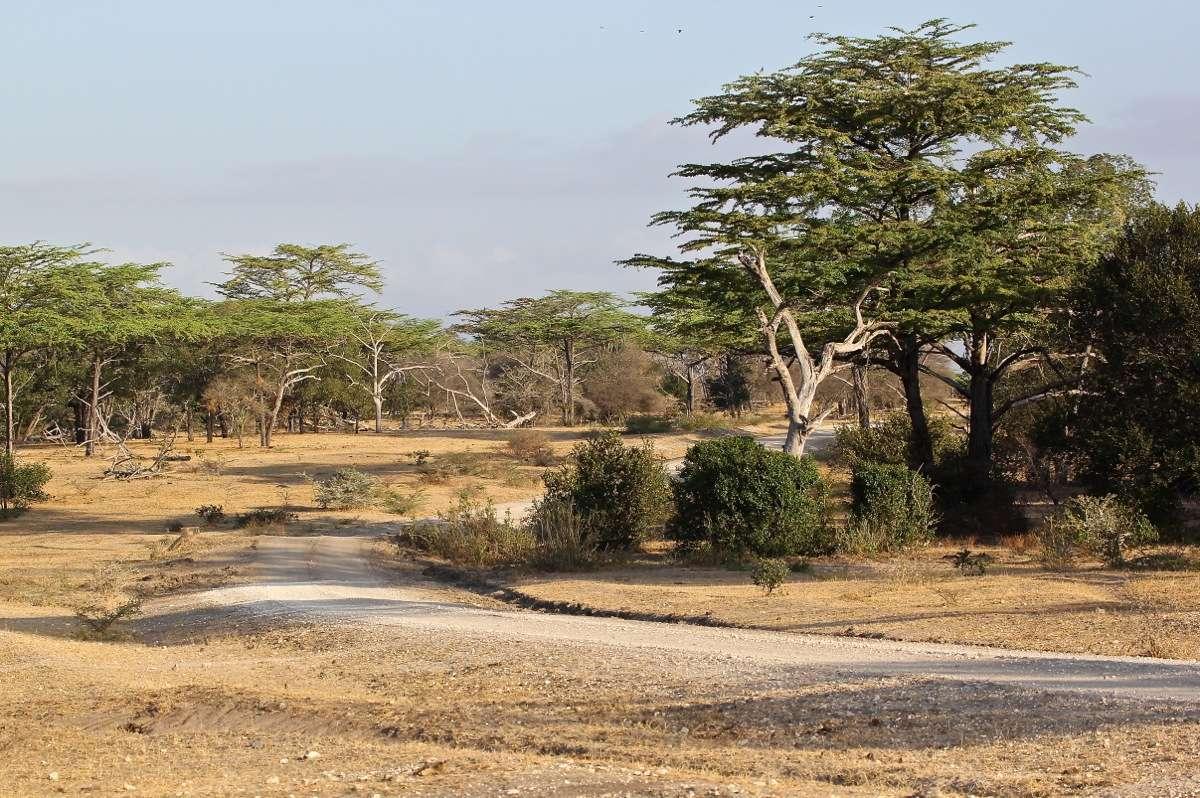 Vols de brousse en Tanzanie .     - Page 5 Img_5810