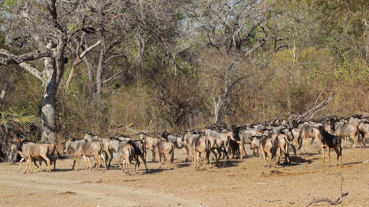Vols de brousse en Tanzanie .     - Page 5 Img_5913