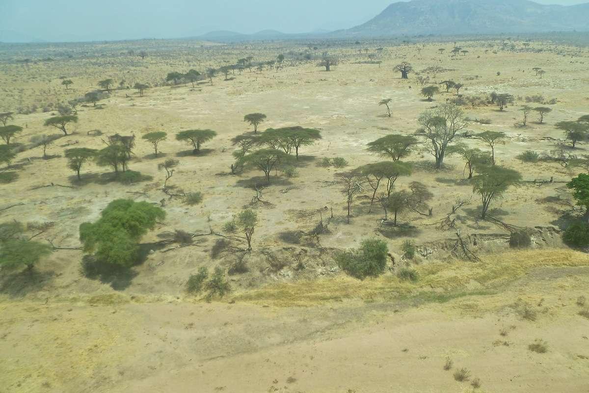 Vols de brousse en Tanzanie .     - Page 5 P1040512