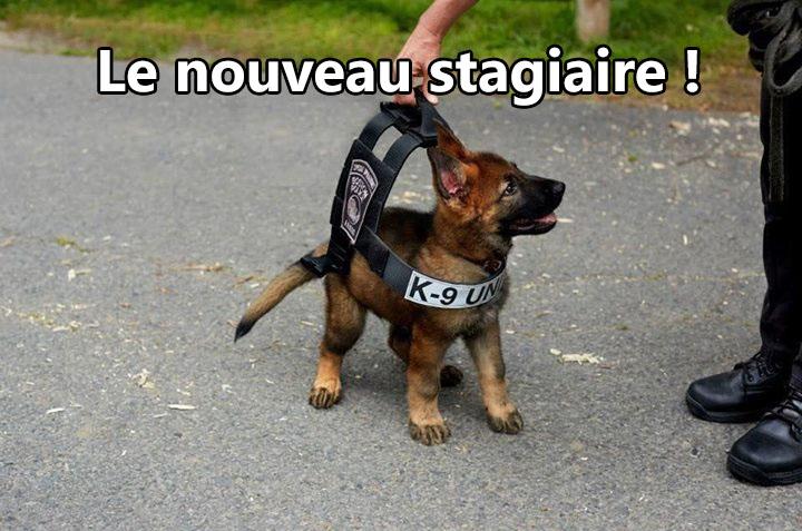 Humour, blagues, infos décalées (Gorafi etc...), photos et vidéos délire ! - Page 4 00000210