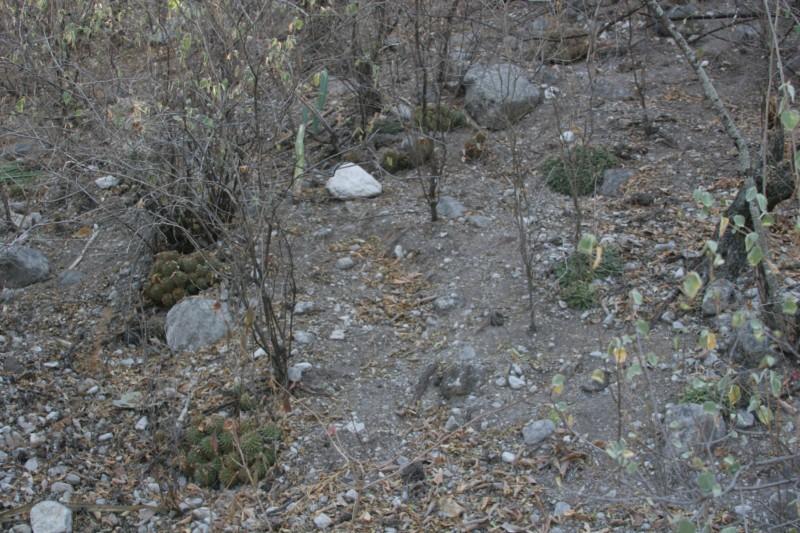 Mammillaria seitziana Img_9310
