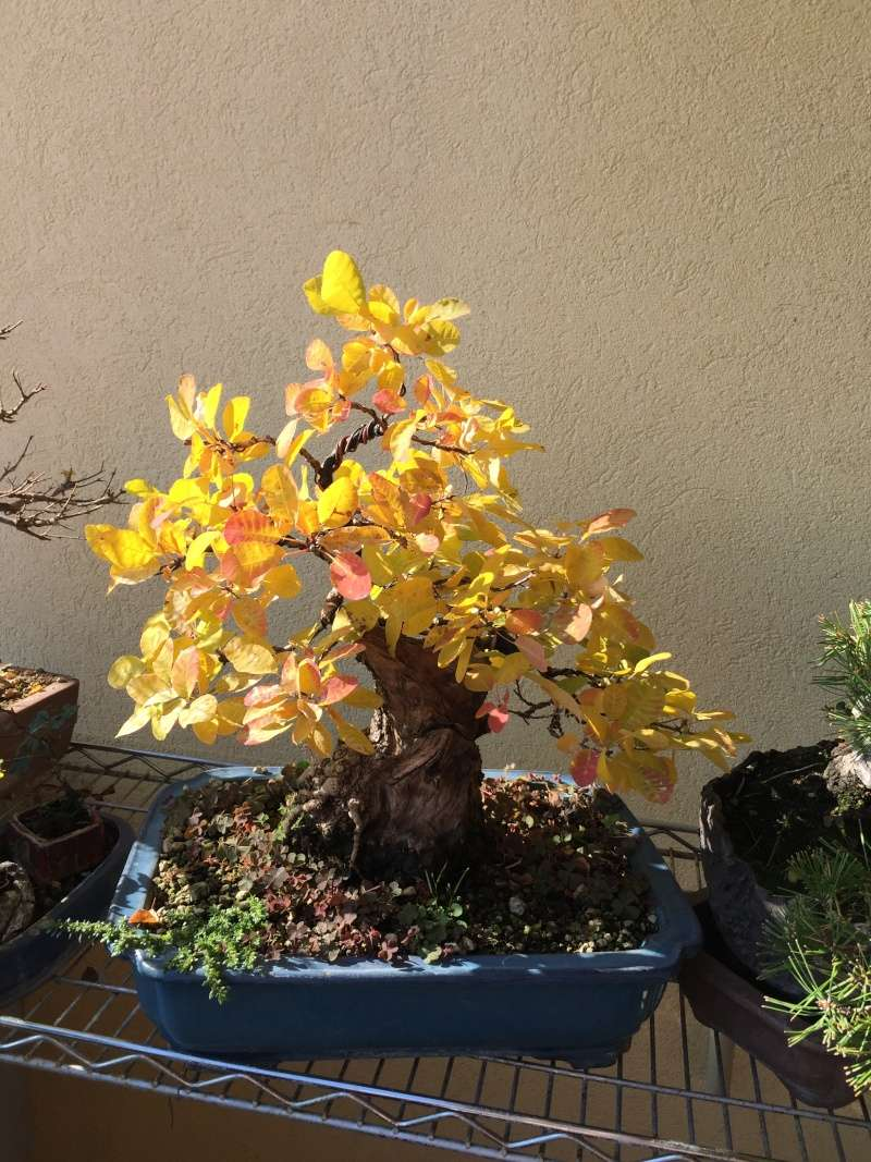 I colori dell'autunno Fb110