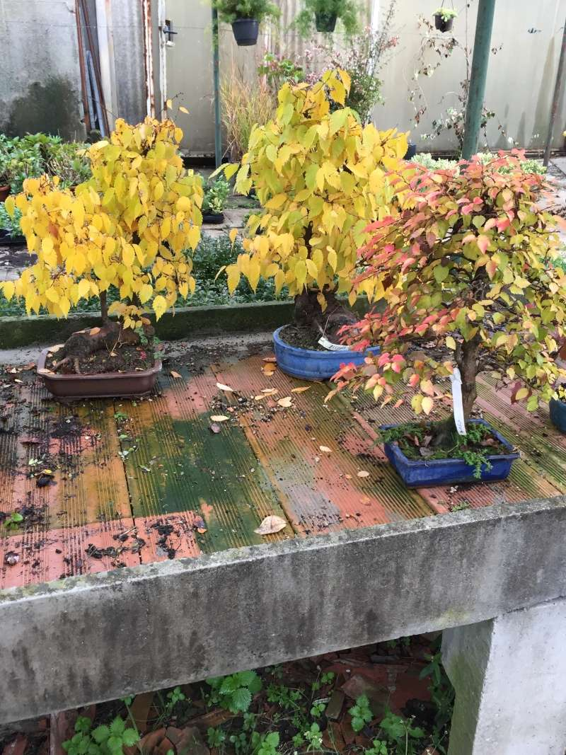 I colori dell'autunno Img_6710
