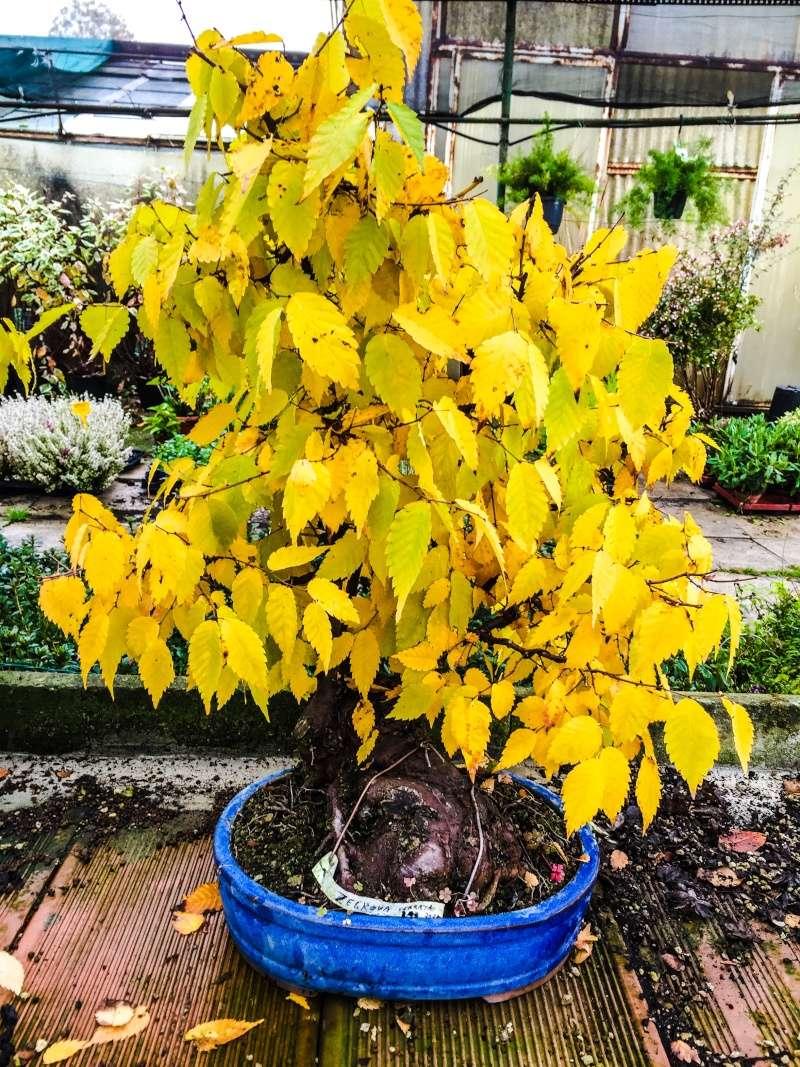 I colori dell'autunno Img_6711
