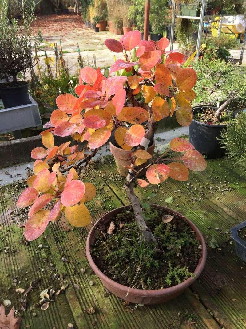 I colori dell'autunno Img_6712