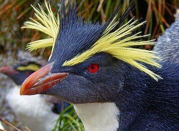 Un oiseau - 30 octobre - ajonctrouvé par Martine Image12