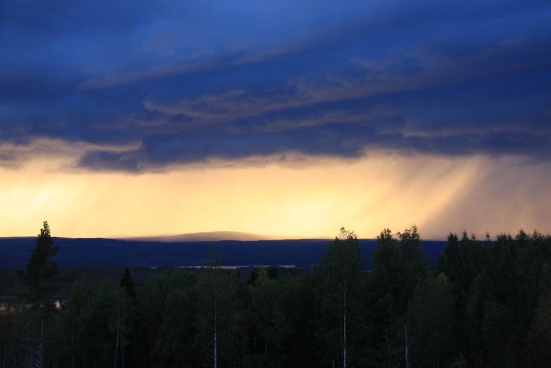 เก็บผลไม้ป่าสวีเดนและฟินแลนด์  Img_4512