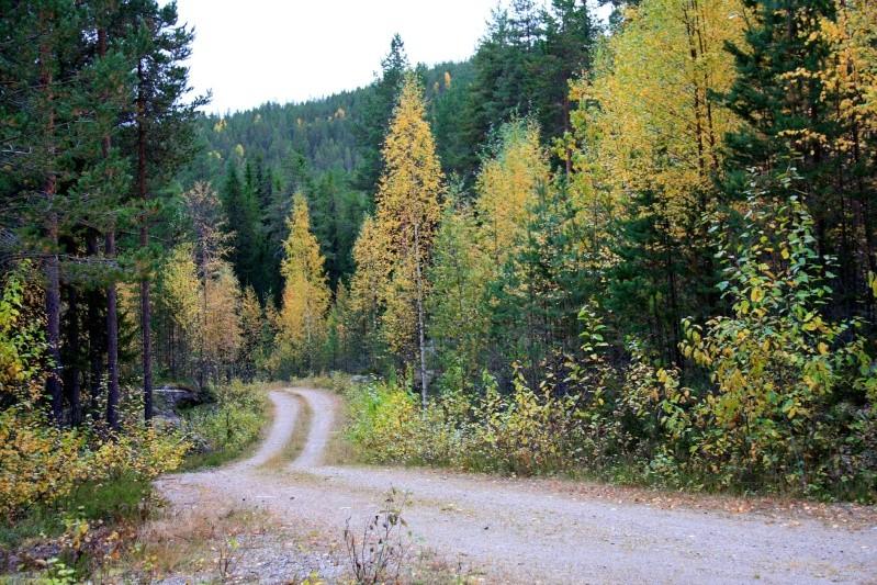 เก็บผลไม้ป่าสวีเดนและฟินแลนด์  Img_5215