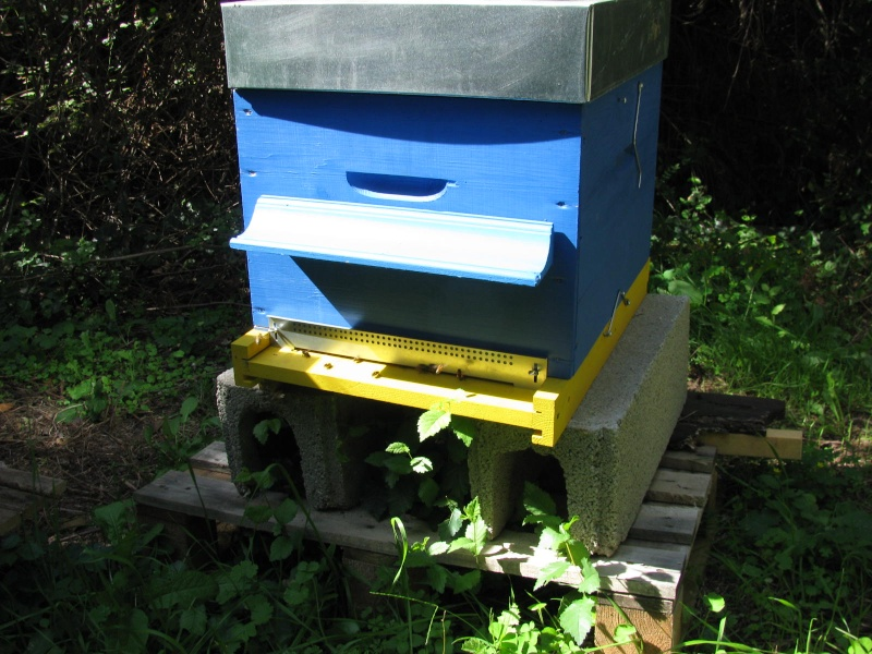 Visite au rucher de Nathalie Img_8110
