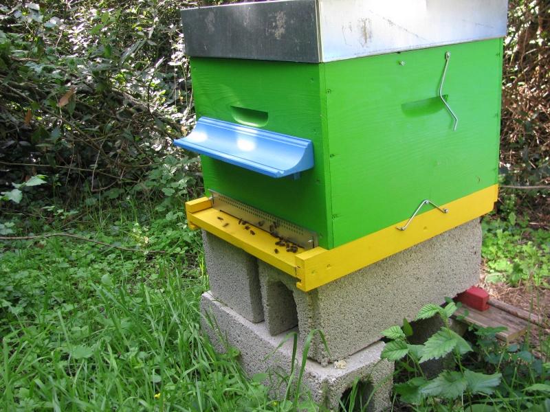 Visite au rucher de Nathalie Img_8111