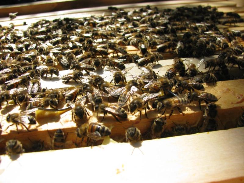 Visite au rucher de Nathalie Img_8112