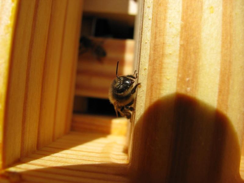 Visite au rucher de Nathalie Img_8113