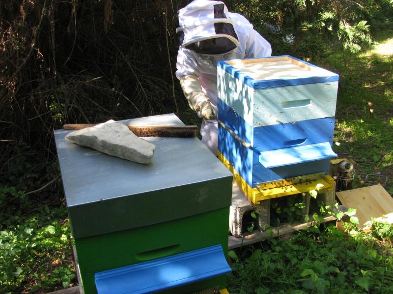 Visite au rucher de Nathalie Img_8115