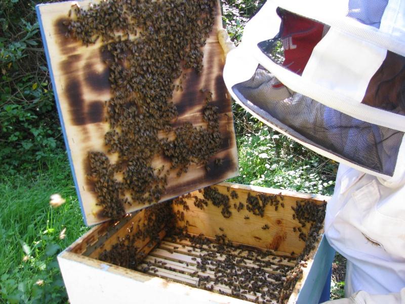 Visite au rucher de Nathalie Img_8116