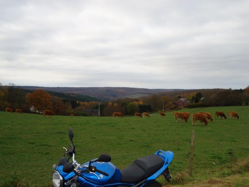 paysage de ma bien belle région Dsc02530