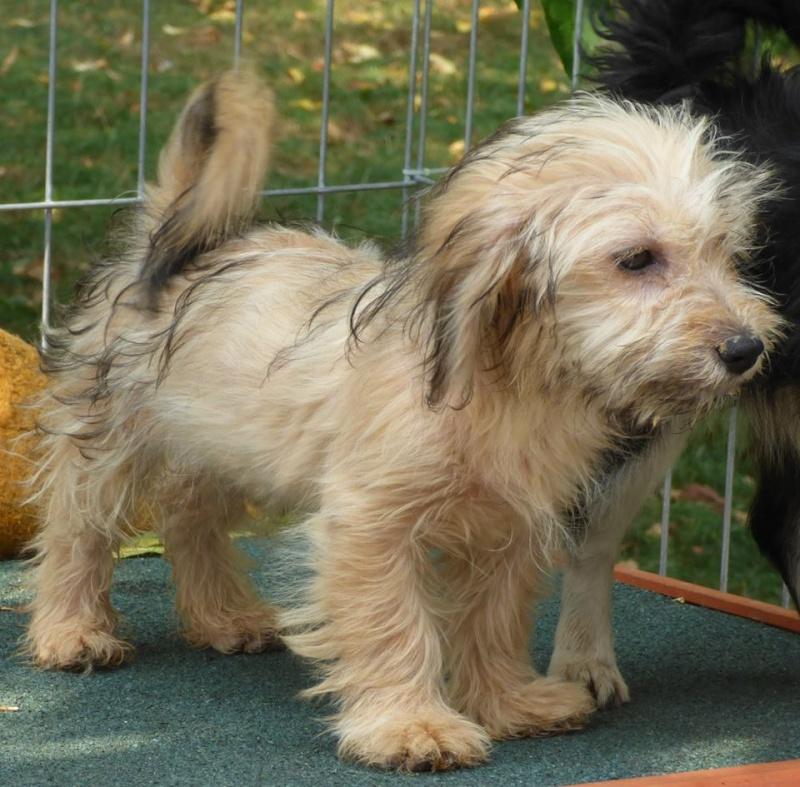 Lucian - SOKA, chiot femelle, petite taille née avril/mai 2015 (Pascani) - adoptée par Aurélie (dpt94) 10509610