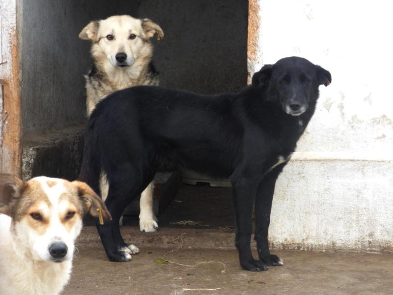 VIOLETTE - Femelle croisée, taille moyenne née env décembre 2010 (PASCANI) - en FA chez kimcham (dpt49) - doit changer de famille ! - Page 3 11222410