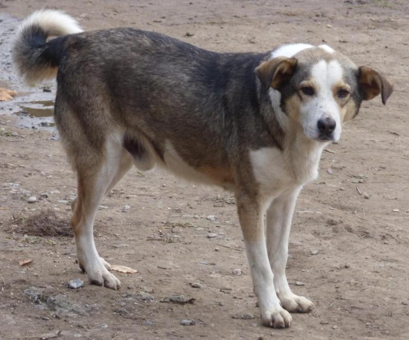 florin - JELLY (ex FANEL), mâle, croisé, taille moyenne, né en juin 2014 -  REMEMBER ME LAND - Adopté par Amandine et Kendy (13) 11698810