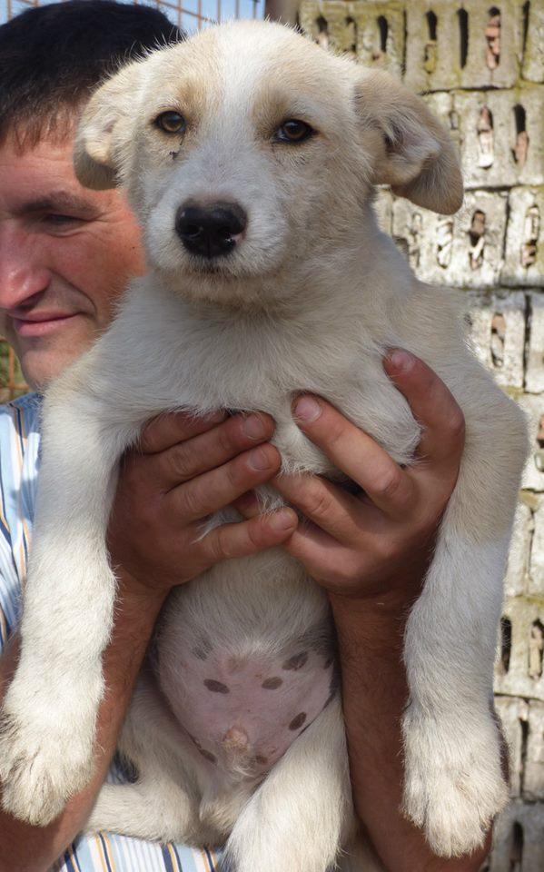 GRIM, chiot mâle, né en avril/mai 2015, taille moyenne à l'âge adulte (Pascani)-EN FOURRIERE - pris en charge par une autre association 12039210