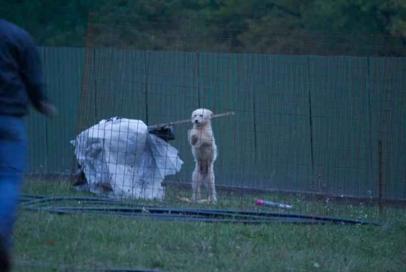 BIBI, femelle croisée labrit taille petite à moyenne née env 2013 - REMEMBER ME LAND - adoptée par Florin 12095110