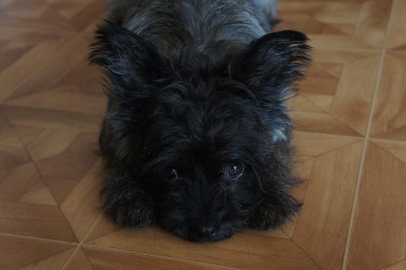 EWOK: mâle croisé cairn terrier né env 2012 - Pascani - adopté par Christine (dpt67) - Page 2 12168910