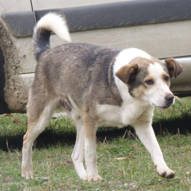 florin - JELLY (ex FANEL), mâle, croisé, taille moyenne, né en juin 2014 -  REMEMBER ME LAND - Adopté par Amandine et Kendy (13) 12185010