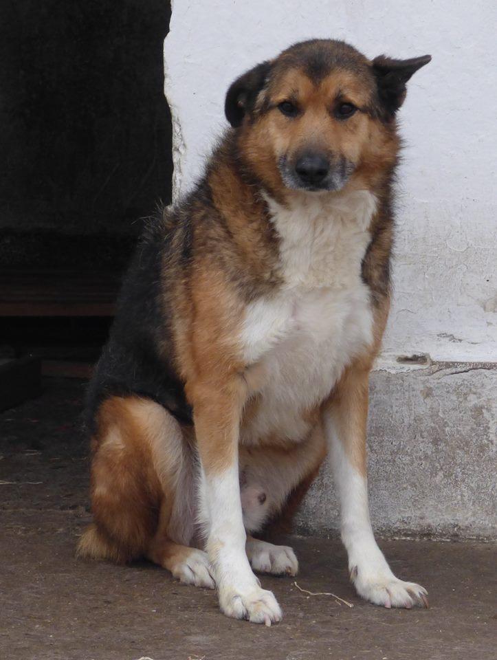 MONSIEUR - mâle,  de taille moyenne, croisé BA, né en 2006 (PASCANI) - En FALD chez Laurence (91) 12187810