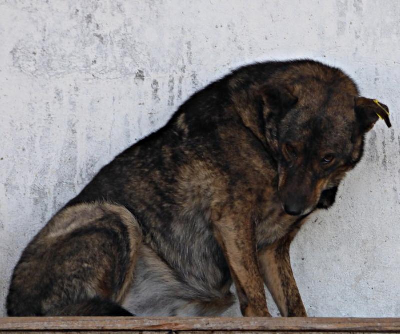 ** HEIWA ** + 5 ANS DE BOX - femelle croisée de taille moyenne, craintive, née environ début juin 2011 - adoptée par Brigitte (91)  12244310
