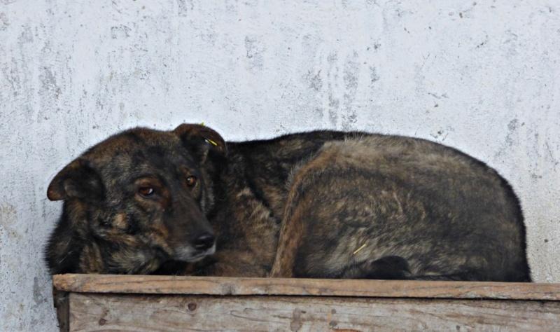 ** HEIWA ** + 5 ANS DE BOX - femelle croisée de taille moyenne, craintive, née environ début juin 2011 - adoptée par Brigitte (91)  90574010