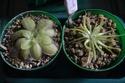 Mes plantes (En bonne santé) Dsc_1813