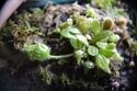 Mes plantes (En bonne santé) V2tw7l10