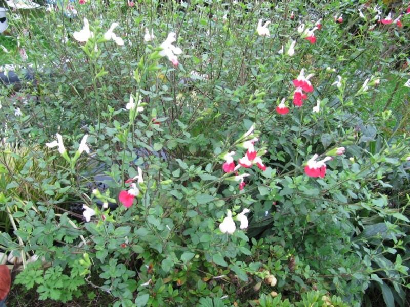 Floraisons du mois de septembre - Page 11 00512