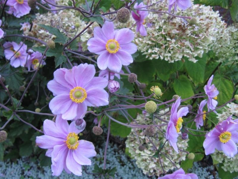 Floraisons du mois de septembre - Page 11 01110