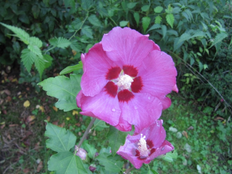 Floraisons du mois de septembre - Page 11 01210