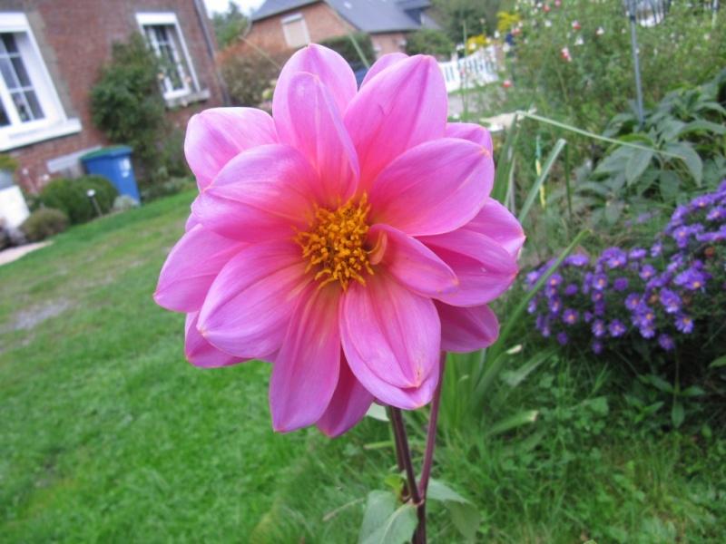 Floraisons du mois de septembre - Page 11 02010