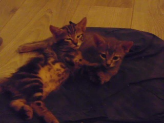 3 chatons d'une semaine, Var Chaton10
