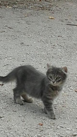 3 chatons, 3 mois, Var Chaton12