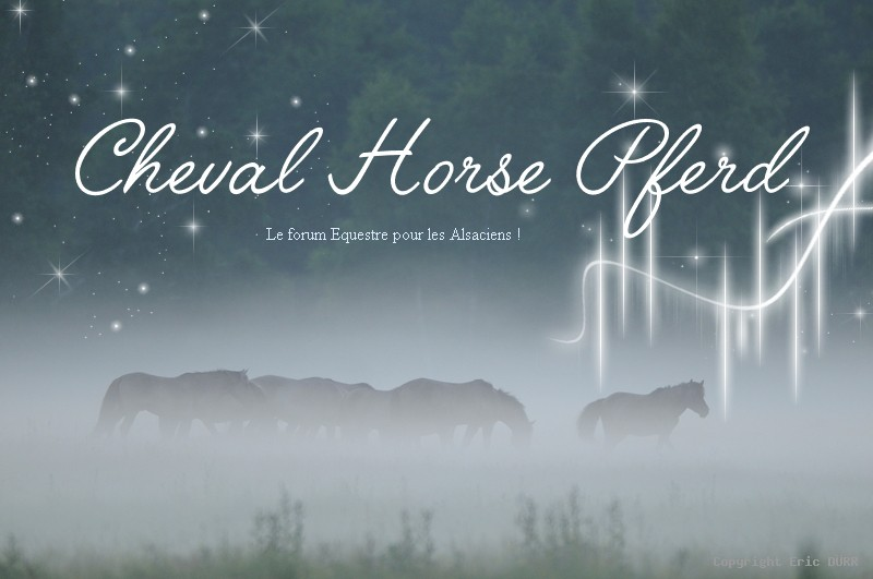 Cheval Horse Pferd