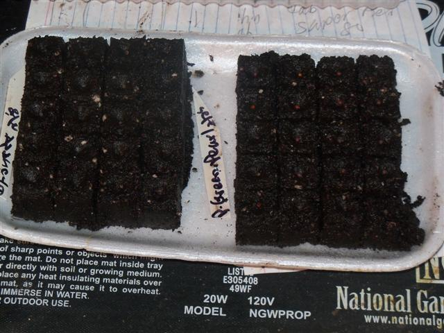 Seed starting - Page 2 02-25-10