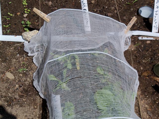 Shading Plants 04-24-12