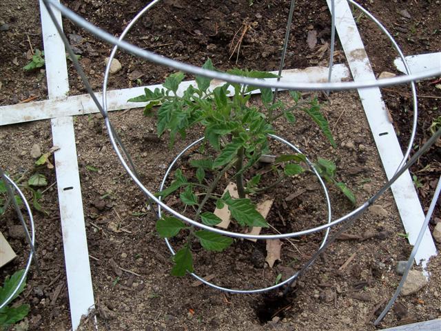 My garden layout 05-12-15