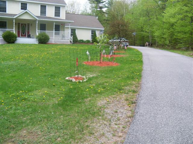 Garden doing good 05-14-11