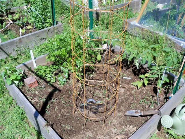 Need help please!  Best way to plant indeterminate tomatos? 06-07-12
