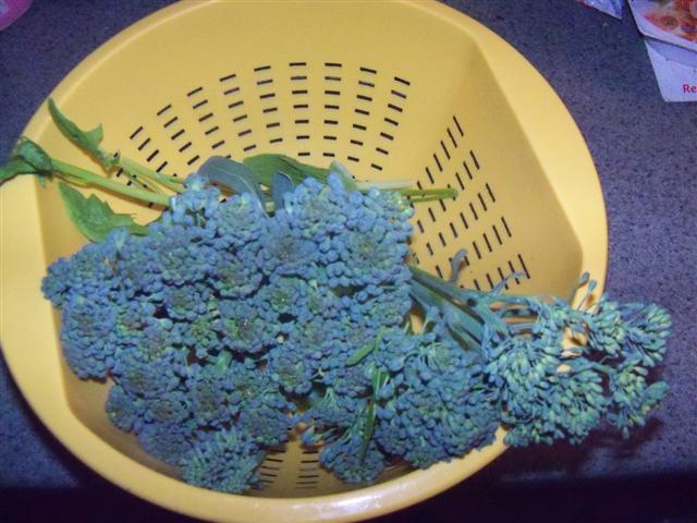 Broccoli, ready for harvest? 06-13-10
